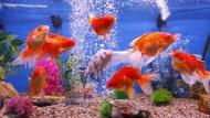 魚缸裡有一隻魚病了,要立即撈出...縱橫股海6年的他,悟出靠「存股」致富的7個關鍵