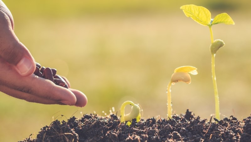 存錢 發芽 種植