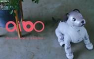 有個性、會撒嬌的機器狗!Sony aibo預購被搶光、股價衝