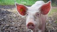 中國將拍賣1萬噸儲備凍豬肉、包括美