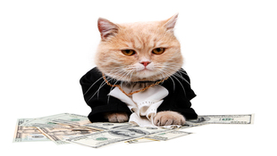 除權息就是賺股利?錯!跟著理財媽媽馬哈看懂眉角,才能賺到公司分紅+未