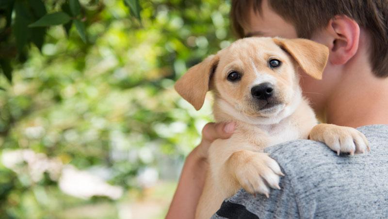 如果孩子想養寵物,你會鼓勵他購買還是領養?選擇不同,父母給予孩子的教導也大為不同…