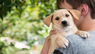 如果孩子想養寵物,你會鼓勵他購買還是領養?選擇不同,父母給予孩子的教