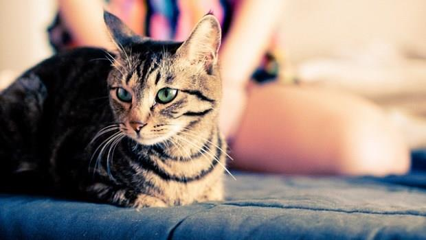 家有毛小孩,社區卻規定禁養寵物怎麼辦?