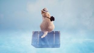 最新》疫情延燒,想退出國機票?各家航空公司退票規定整理!